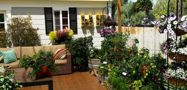 Grow A Container Vegetable Garden On Your Patio Tips The Foodie Adorable Container Garden Design Property