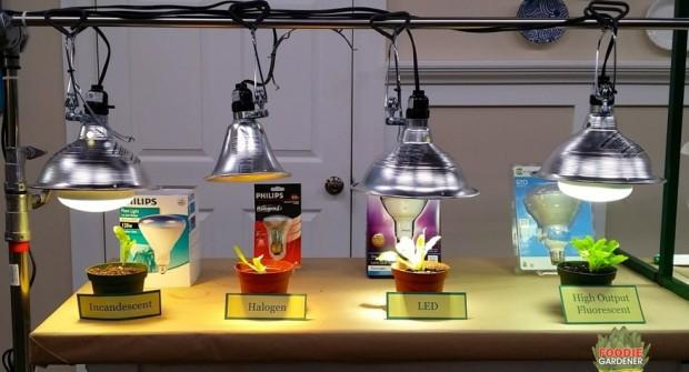 Grow Lights For Beginners: Start Plants Indoors