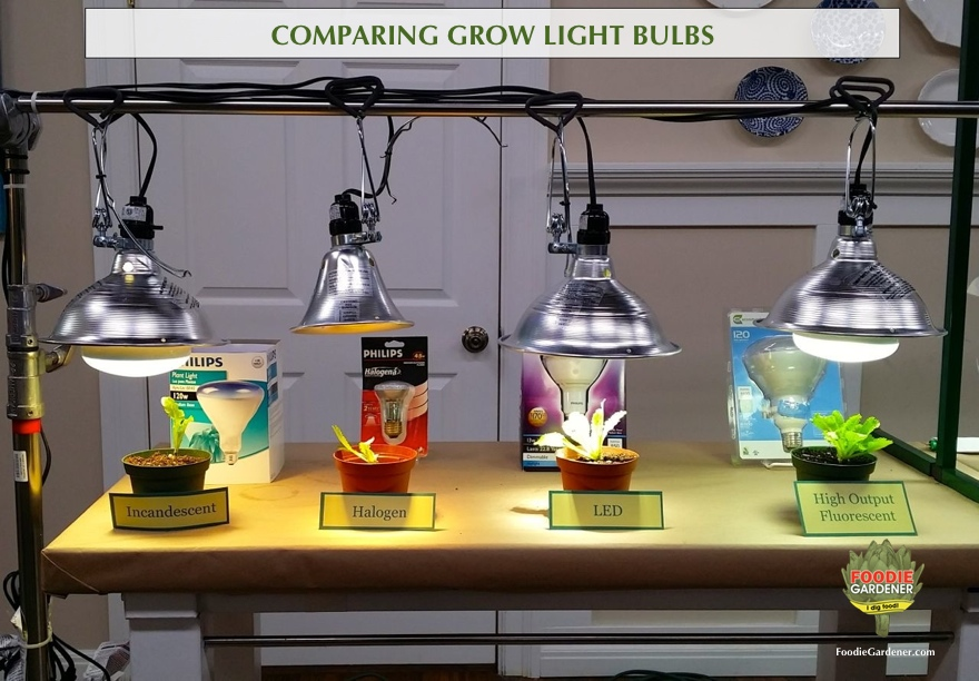 Grow Lights For Beginners: Start Plants Indoors | The Foodie Gardener™