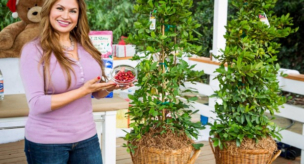 Miracle Fruit Trees: Berries Make Sour Foods Taste Sweet!